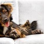 puppy and kitten health exam at island veterinary hospital Richmond