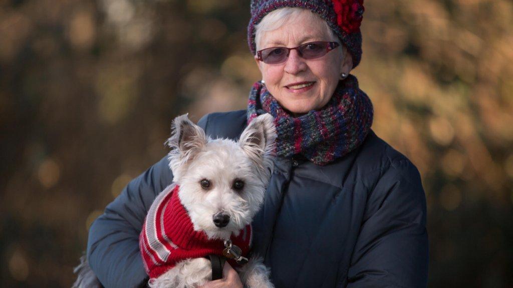 Preventive health exam for terrier Dog at Island veterinary hospital richmond