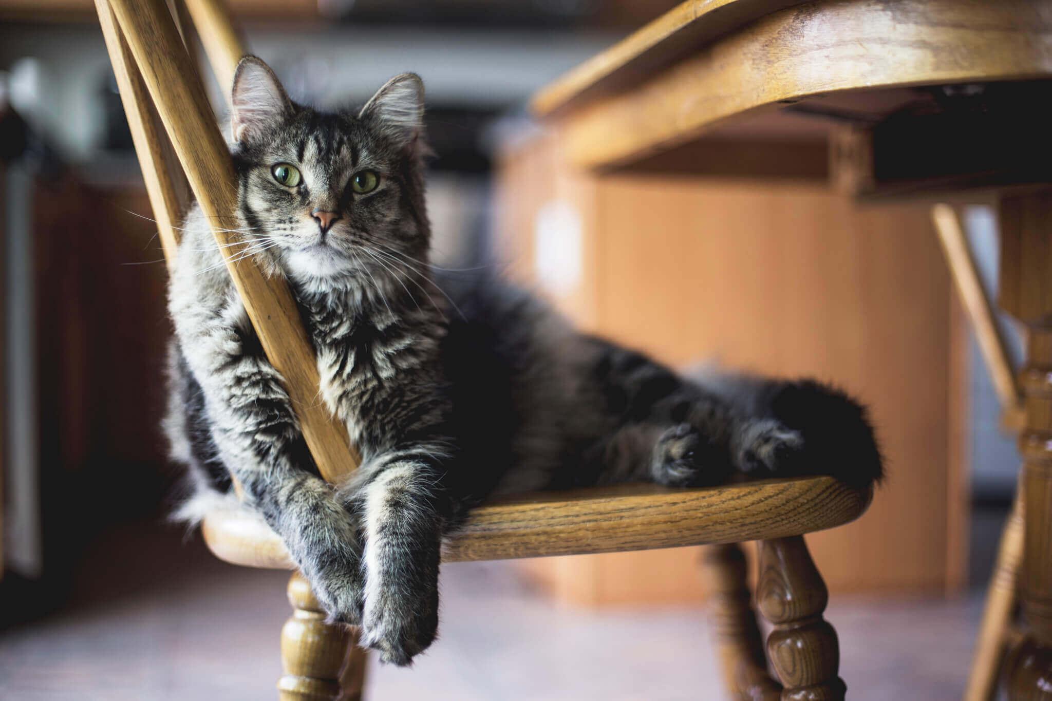 cat chair veterinary hospital richmond