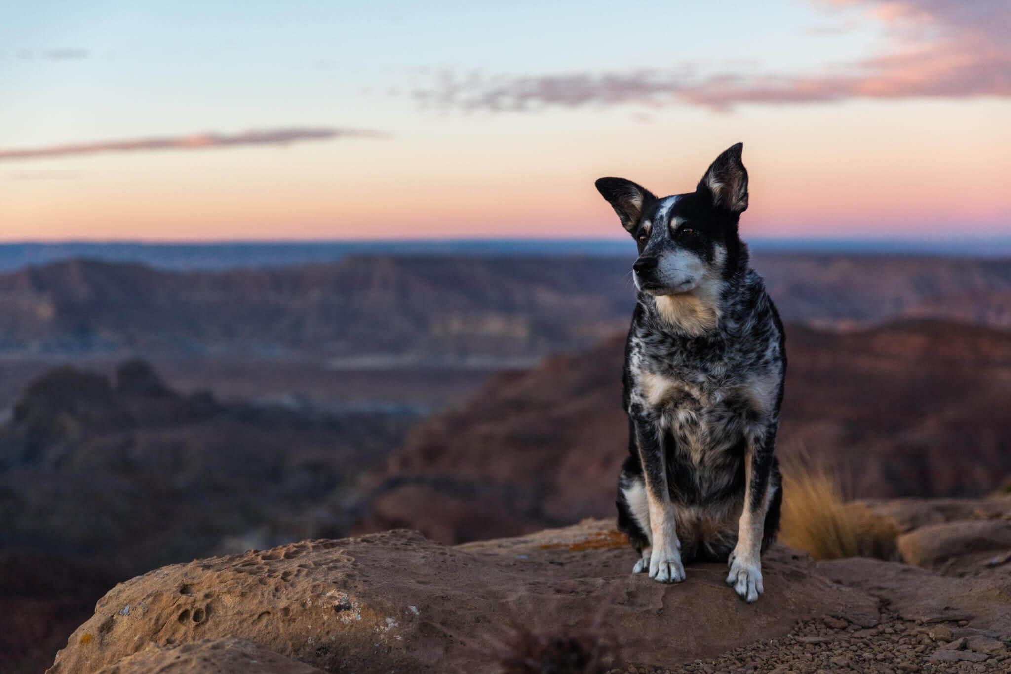 Dog veterinary hospital richmond