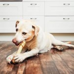 The Importance of Pet Dental Health at a Veterinary Hospital in Richmond