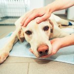 Looking for a Vet Clinic in Richmond?