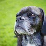 Richmond Vet Care for Your Aging Pet