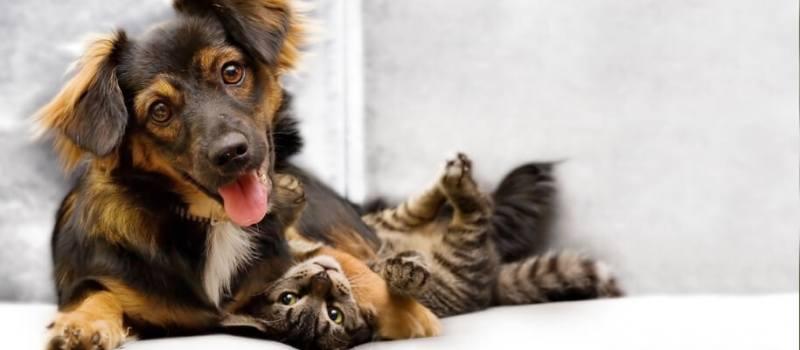 puppy and kitten island veterinary hospital Richmond